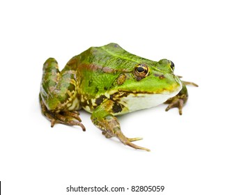 green water frog isolated on white