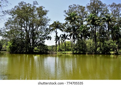 Green water of the lagoon and coconut trees on the shore in the city park