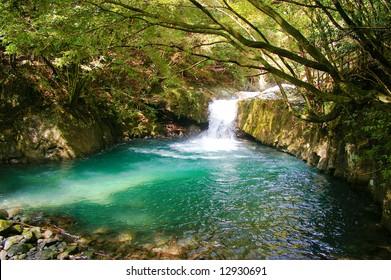 Green waterhole in the forest