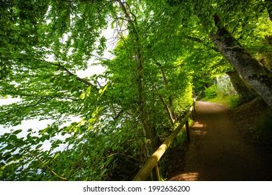 green way on weßlinger lake, germany, sunny day