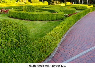 green well-groomed plants and trimmed shrubs in landscape design
