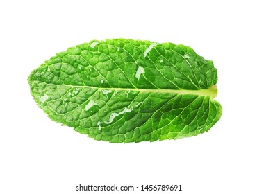 Green wet leaf of fresh mint isolated on white