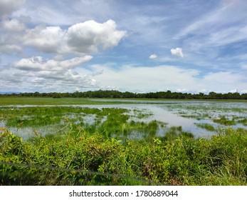 Green wetland and birwatching location summer