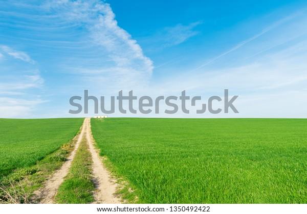 green-wheat-field-blue-sky-600w-13504924