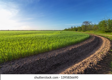 green wheat field near irrigation canal / agriculture in the countryside
