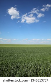 Green wheat field in spring with beautiful sky and clouds