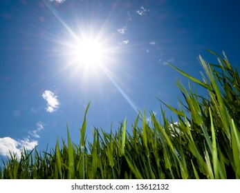 Green wheat field at spring under the sun