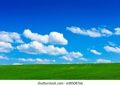 Green wheat field at sunny spring day with blue sky