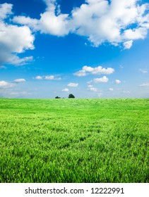 Green wheat field with white clouds in the blue sky