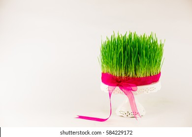 Green wheat grass - semeni - on white stand decorated with purple ribbon on white isolated background