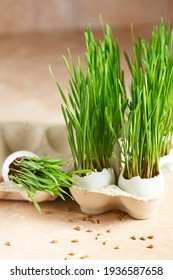 Green wheat sprouts in egg shells in a cardboard tray. Easter decorations. Easter egg. Spring composition. Natural Easter eggs with wheat grass. Stylish Rural still life. Zero waste concept
