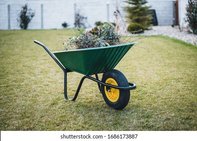 Green wheelbarrow in the garden. Garden wheelbarrow full of weeds and branches.