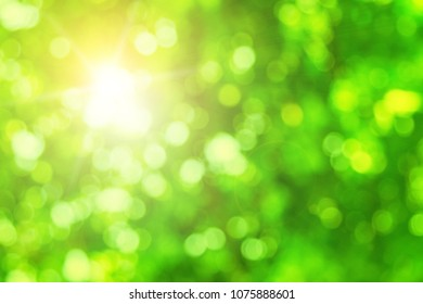 Green and white blur defocused nature blurred or bokeh circles color snow glow colorful light sparkling under a tree with light survived spring abstract background.