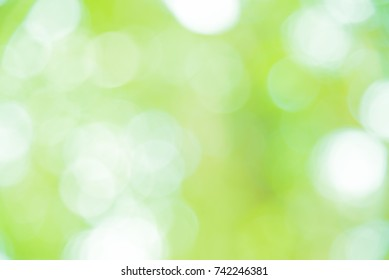 Green and white bokeh backgroung from natural forest