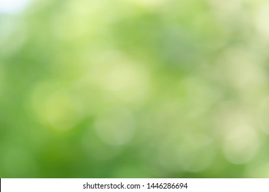 green and white bokeh from tree