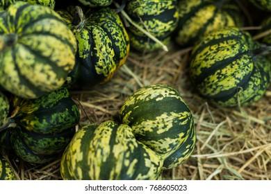 Green and white color pumpkin./ pumpkins