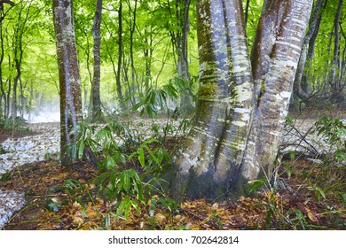Green & white forest