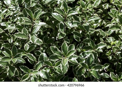 Green and White Leaf Pattern