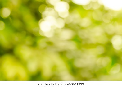 green and white light blur colorful texture bokeh in early morning feel refreshing