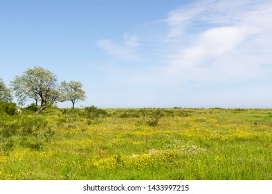 Green wide open grassland filled with yellow flowers by springtime in a nature reserve at the swedish island Oland