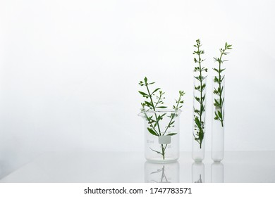 green wild plant in beaker and test tube for cosmetic skin care or pharmacy rearch white science white background