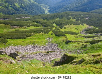Green wood of coniferous trees and stones on summer mountainside (Ukraine, Carpathian Mountains)