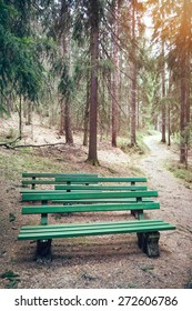 Green wooden benches in a coniferous forest