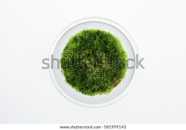 Green world with fresh air
