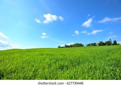 Green Yard Under The Nice Sky in Summer