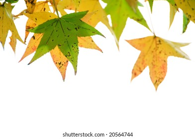Green and Yellow autumn leaves in white background