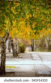 Green and yellow autumn trees