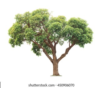 Green and yellow beautiful big tree isolated on white background