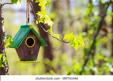 Green, yellow and brown birdhouse hanging from tree branch with blurred yellow spring flowers and blue sky blurred in background; springtime background with copy space