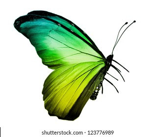 Green yellow butterfly , isolated on white