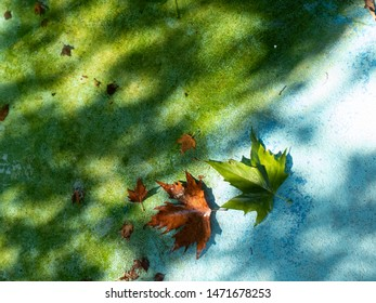 Green and yellow fallen maple leaves on blue background next to green water