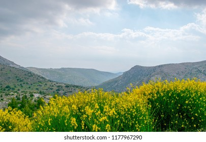 Green and yellow flowers with nice mountainous background and blue cloudy sky.