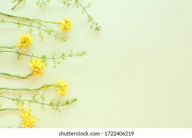 green and yellow flowers on green background. srping and summer background with frame and copy space.