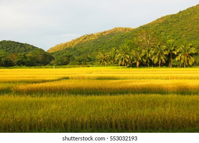 Green and yellow grass field in Coron, Philippines. Natural landscape