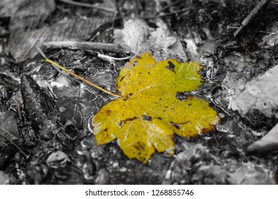 Green and Yellow Leaf on a Black and White Background