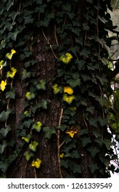 Green and yellow leaves on tree. Ooty, India, Tamil Nadu, Coimbatore