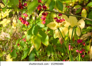 green and yellow leaves and pink berries in forest