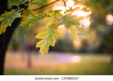 Green yellow leaves with sun in background