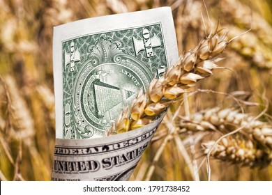 green and yellow oats or other cereals on agricultural land, farming for yield and profit, money in rural economy, cash dollars