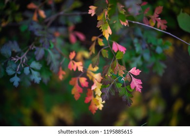green, yellow, orange, red, and green leaves