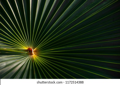 Green and yellow palmetto palm frond abstract circular pattern with bright light in the center.