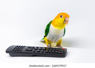A green and yellow parrot is standing behind a remote control