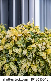 Green and yellow plant with building facade background