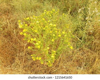 green and yellow plants and flower and grasses