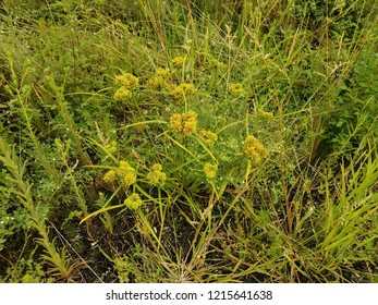 green and yellow plants and grasses and soil