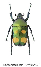 Green with Yellow Spots Metalic Beetle